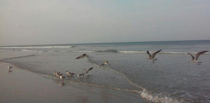 cocoaBeach-flock-o-seagulls-535235b