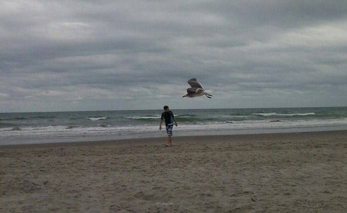 Fave Fotos: When Seagulls Attack!