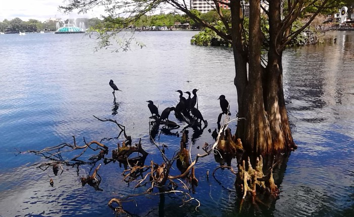 Fave Fotos: A View of Orlando's Lake Eola Park