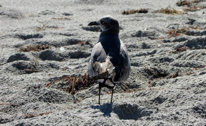 Final Fave Foto: Meet My New GullFriend