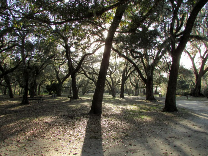 A Busy and Cold Weekend Here in Florida. Let's Look at Moss Park Pix Again!