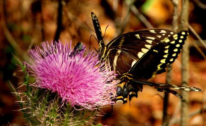 J'ai seulement vu un papillon la premièrefois