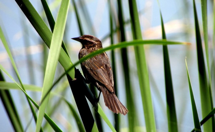 Fave Fotos: a Bird on the Shore of Lake Griffin fromMid-April