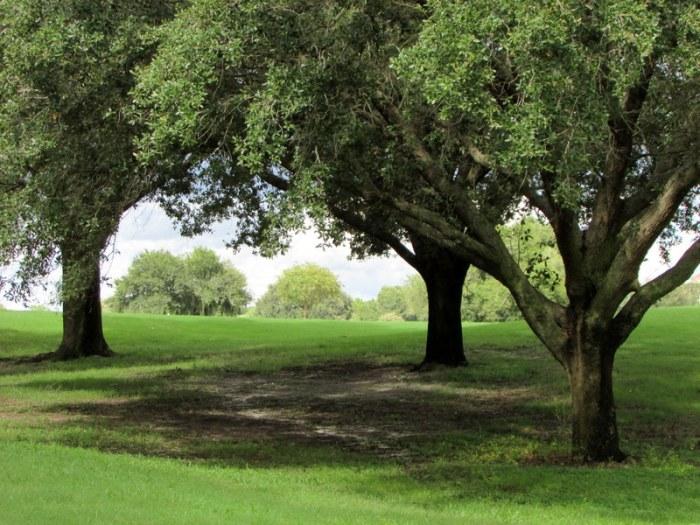 Haiku: Trees andFlowers