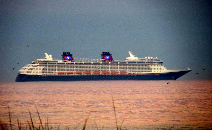 Bulldog Is NOT On a Disney Cruise Line Ship, but He Just…
