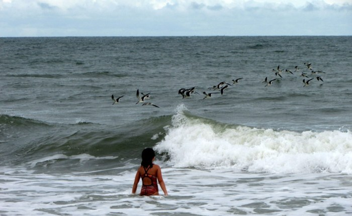 Of Girls and Gulls