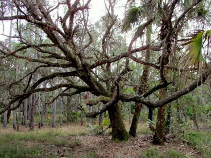 Ben Murders a Haiku. The Tree'sFine.