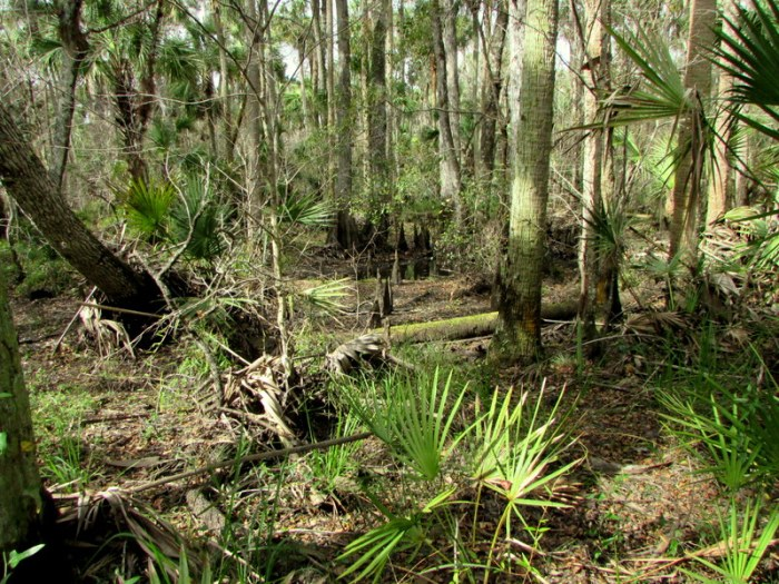 More Photos of the Tosohatchee WMA comingsoon