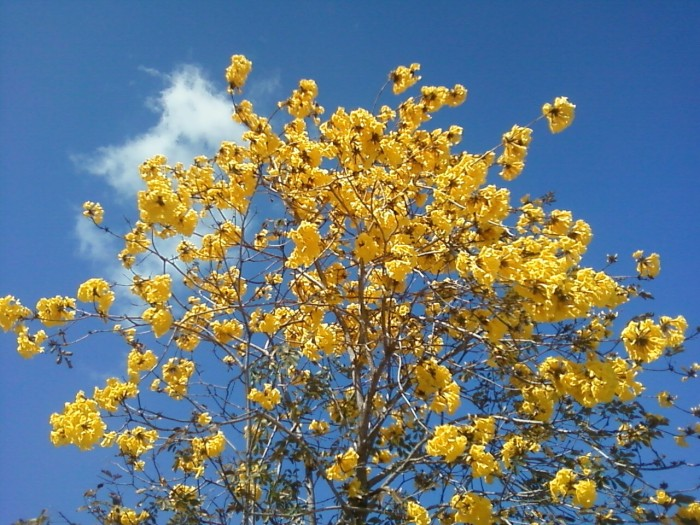 In Praise of BlossomingTrees