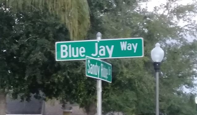Strolling Down Blue Jay Way